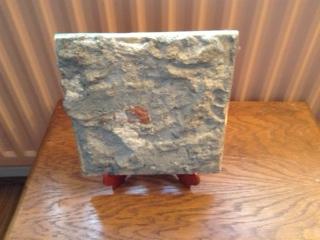 pauline's tile back